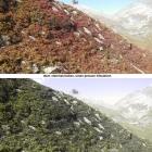 25.9.: Bergherbst: für zahlreiche Farbfehlsichtige sehen die beiden Bilder identisch aus