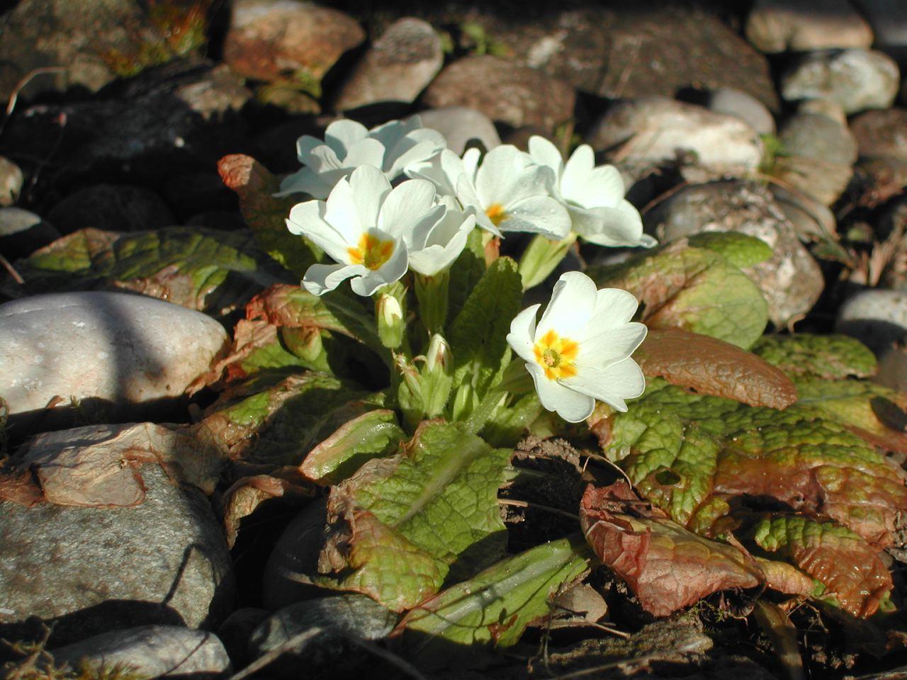 Bildergalerien umweltnetz.ch » Frühlingsbilder