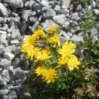 5.8.: Blumenstrauss (nicht zum Mitnehmen!)