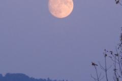 19.11.: Mond