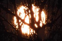 12.12.: Mondaufgang hinter Bäumen