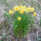 17.4.: Dienstagabend-Spaziergang am Uetliberg, natürlicher Blumenstrauss