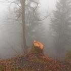 26.11.: nach dem Bäumefällen am Uetliberg