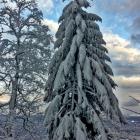 17.12.: Bäume im Schnee
