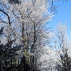 1.1.: Bicht-Bäume vor blauem Himmel