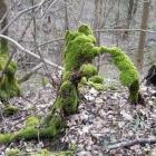 19.3.: Moos-Bäume