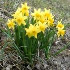 2.4.: #Sonntagsbild: Blumenpracht #Uetliberg Ostwand