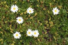 22.7.: Blumenwiese