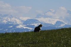 31.3.: Katze mit Bergaussicht