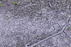 7.4.: Trockenrisse auf den Uetliberg-Wegen