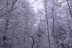 25.12.: Weihnachtswald